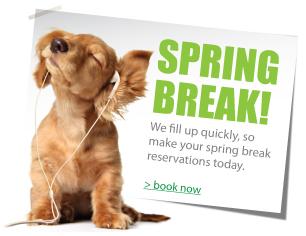 Spring, duncan, Geronimo, cache, altus, dog, cat, puppy, boarding