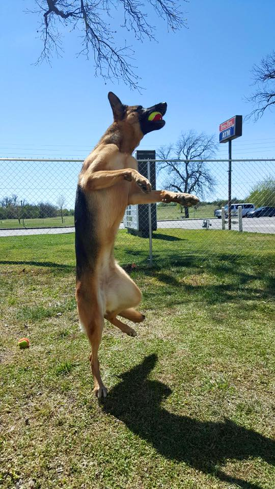 Lawton Veterinary Hospital -boarding, fenced yard, playing, Ft. Sill